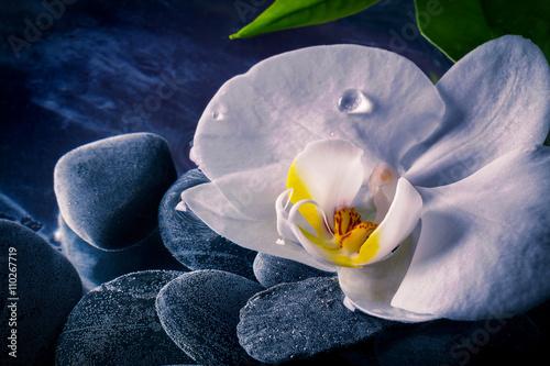 Pinturas sobre lienzo  Orchidea Bianca
