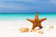 Starfish on the white sandy beach