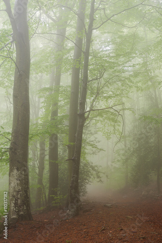Foto auf Acrylglas Wald im Nebel Details of a forest in spring