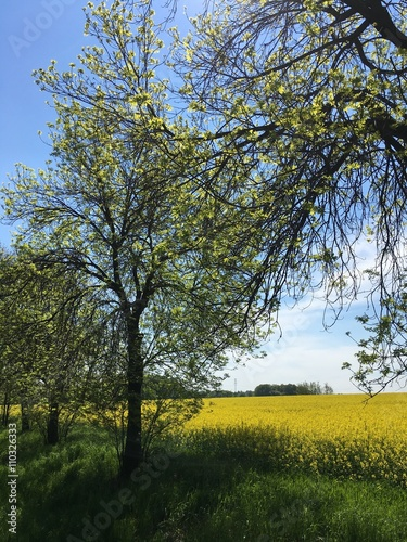 Foto op Plexiglas Landschappen drzewo