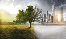 Human Impact On Nature