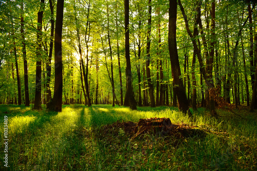 Foto auf Gartenposter Wald Beautiful view of the sunset in the forest