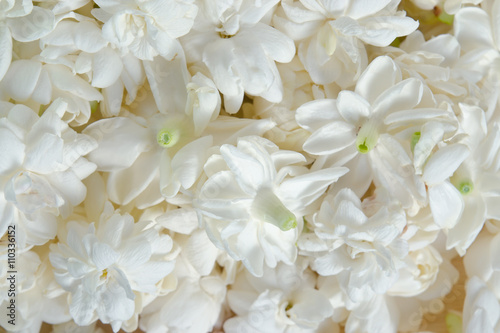 Fotografie, Obraz  Jasmine flowers spreading over background