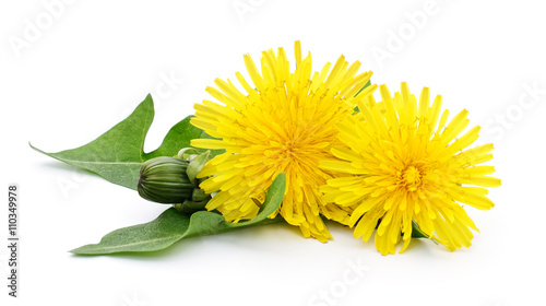 Foto op Plexiglas Paardenbloem Two dandelions with leaves.