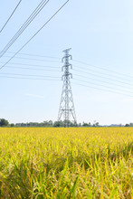 Power Line And Rice Field