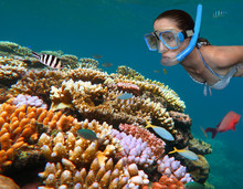 Young Woman Snorkeling In The Great Barrier Reef  Queensland Aus
