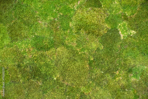 Photo moss background
