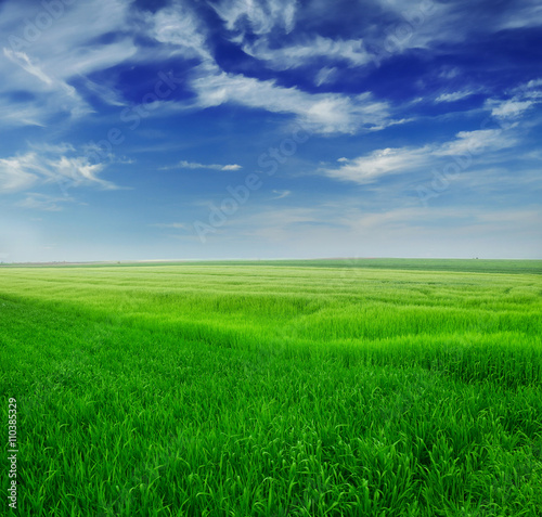 Photo Stands Green Green wheat in the field