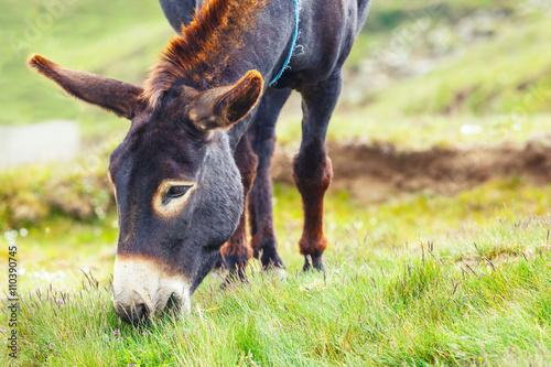 Tuinposter Panter Grey donkey, portrait