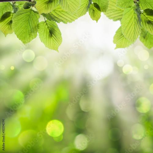 Fototapety, obrazy: Spring green background