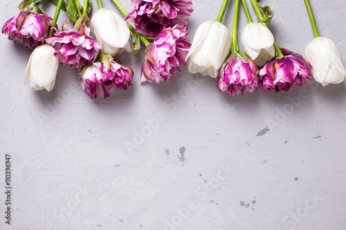 Foto op Plexiglas Spa Bright violet and white tulips flowers on grey textured backgro