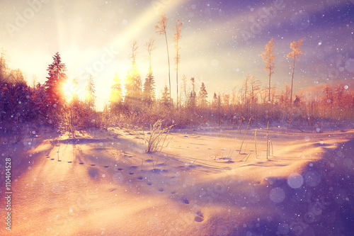 Foto op Plexiglas Snoeien Winter sunset in the forest landscape