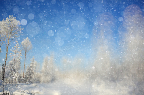 Fototapety, obrazy: winter background blur forest snowflakes bokeh