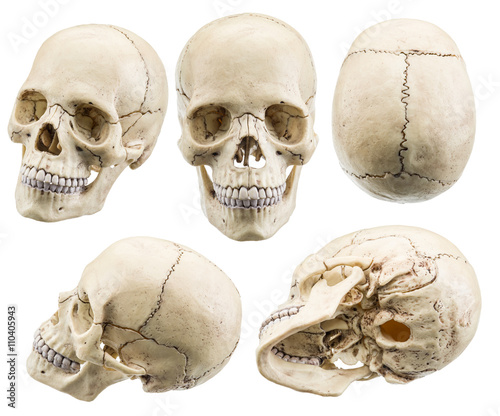czaszka-model-odizolowywajacy-na-bialym-tle