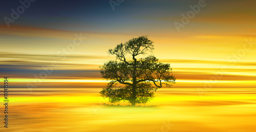 Photo Stands Yellow Beautiful colorful natural landscape.