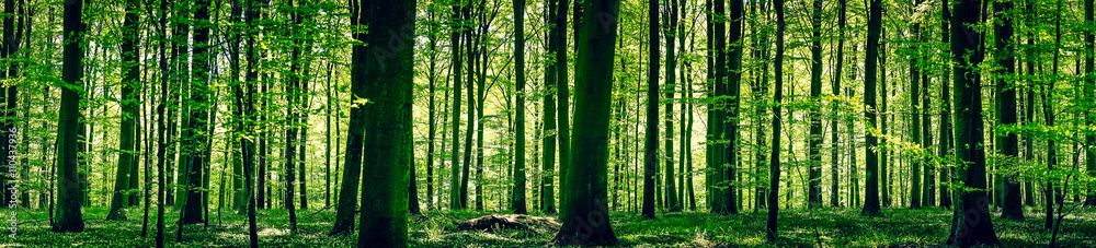 Fototapeta Idyllic forest in the springtime