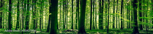 Aluminium Prints Panorama Photos Idyllic forest in the springtime