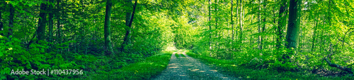 Garden Poster Forest Dirt road in a green forest panorama