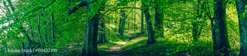 Aluminium Prints Green Forrest foliage with green trees