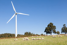 Wind Turbine With A Flock Of Grazing Sheep Below In A Sustainable Energy And Agriculture Concept Against A Sunny Blue Sky