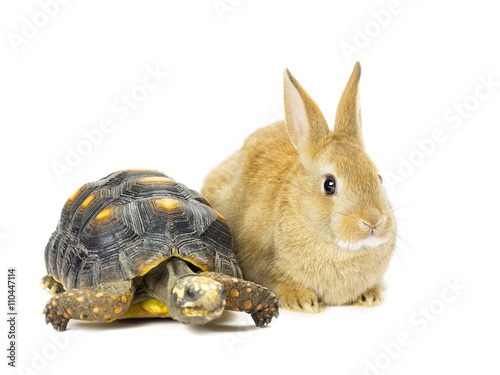 Poster Tortue rabbit and turtle