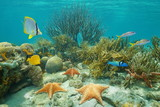Underwater coral reef with starfish and tropical fish, Caribbean sea
