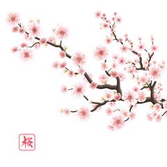 Realistic sakura blooming flowers. EPS 10