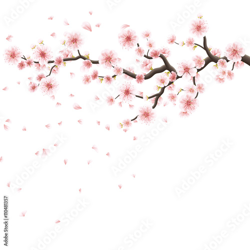 Pink sakura flowers isolated on white. EPS 10 Wall mural