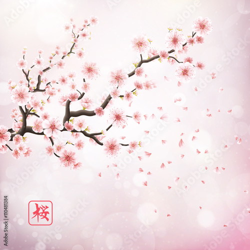 Pink sakura flowers isolated on white. EPS 10 Poster