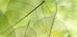 Leinwanddruck Bild - spring forest - fresh leaves and sun rays