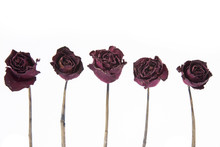 Dry Rose Isolated On White Bac...
