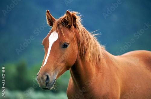 Foto op Canvas Paarden Horse