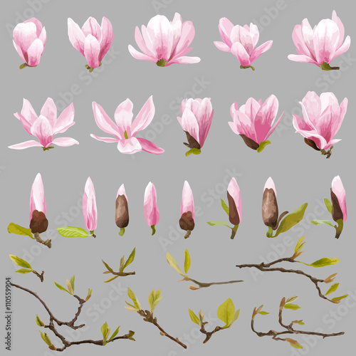 Photo  Magnolia Flowers and Leaves Set. Exotic Flower. Vector