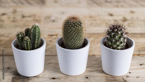 Papiers peints Cactus Row of three cactus plants