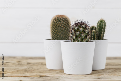 Foto op Canvas Cactus Three cactus plants in white pots