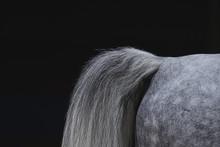 Arabian Tail