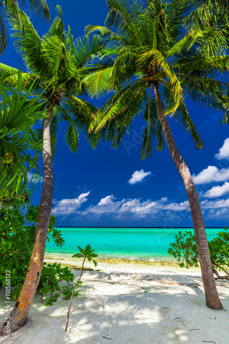 Fototapeta Two palm trees framing a beach entrance to tropical blue lagoon obraz
