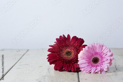 Foto op Aluminium Gerbera blumen