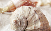 Illustration Of Golden Ratio I...