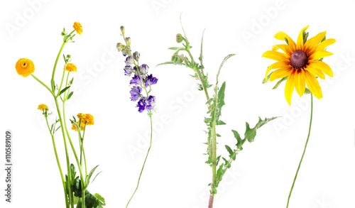 Set of beautiful meadow flowers, isolated on white