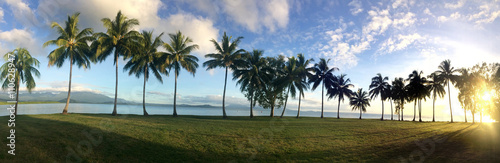 Panoramic landscape view of a Row of palm trees in Port Douglas