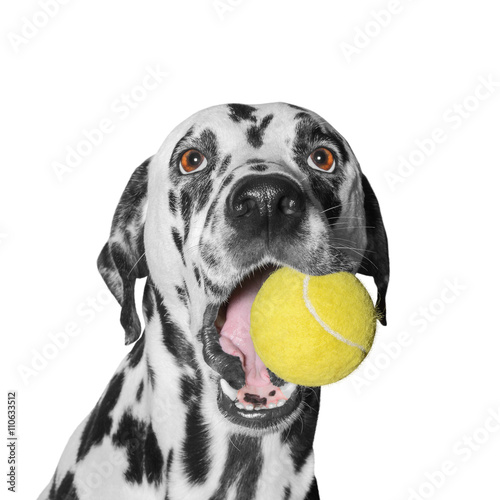 Poster Chien dog holding a ball
