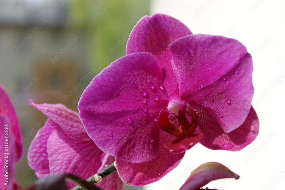 Obraz Kwiaty - storczyki fototapeta, plakat
