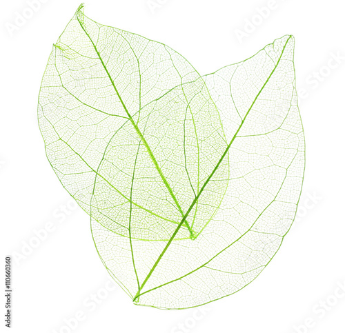 Poster Decorative skeleton leaves Skeleton leaves isolated on white