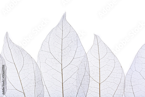 Autocollant pour porte Squelette décoratif de lame Skeleton leaves isolated on white
