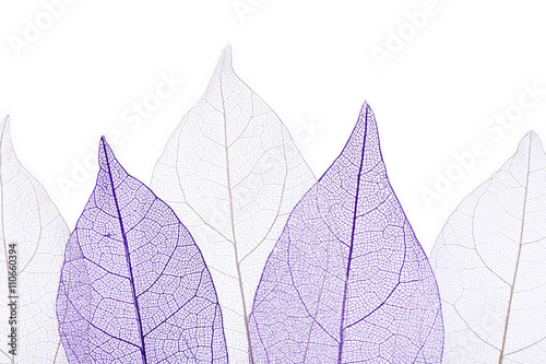 Tuinposter Decoratief nervenblad Skeleton leaves isolated on white