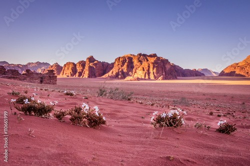 Spring Wadi Rum desert - Valley of the Moon in Jordan. UNESCO Wo Wallpaper Mural