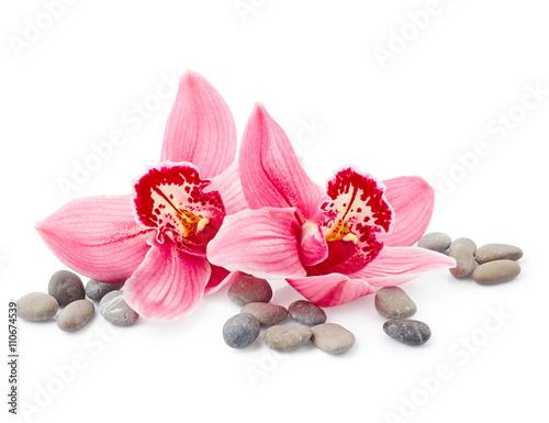 Doppelrollo mit Motiv - Orchid flowers