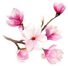 Spring Background With Watercolor Magnolia Flower