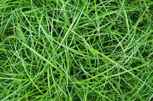 The Long Green Matted Grass, Background